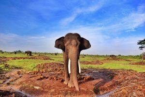 2-Taman-Pelatihan-Gajah-Bukit-Batu