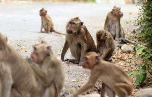 5-Wisata-Kampung-Monyet