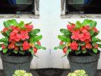 2.-Bunga-8-Dewa